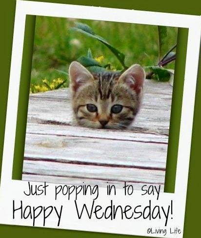264 best wednesday images on Pinterest