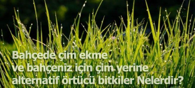 Bahçede çim ekme ve çim yerine alternatif örtücü bitkileri | HSY Ev İşleri Geliştirme Bilgileri | hadisizdeyapin.com