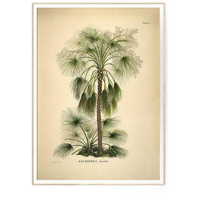The Dybdahl Co LIVISTONA humilis Botanical Palm Print