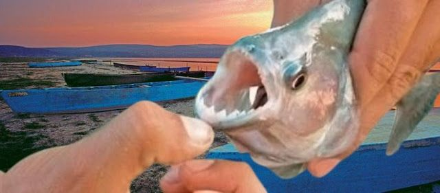 Πιράνχας δάγκωσε ψαρά στην λίμνη Δοϊράνης