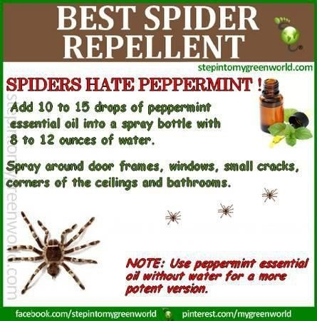 Healthy Living Diy Peppermint Spider Repellent Good To Know Pinterest Bugs And Home