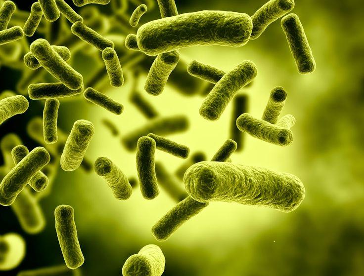 AIRLIFE te pregunta  ¿Cuantas bacterias tiene el cuerpo humano? Hay aproximadamente diez veces tantas células bacterianas como células humanas, con una gran cantidad de bacterias en la piel y en el tracto digestivo. Aunque el efecto protector del sistema inmunológico hace que la gran mayoría de estas bacterias sea inofensiva o beneficiosa, algunas bacterias patógenas pueden causar enfermedades infecciosas.