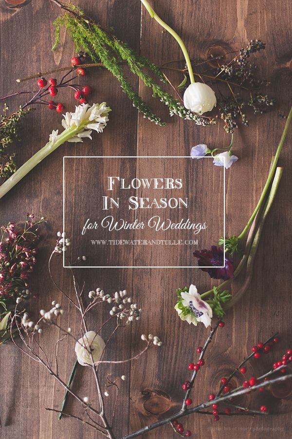 In Season: Flowers for Winter Weddings / Tidewater and Tulle | A Virginia Wedding Blog