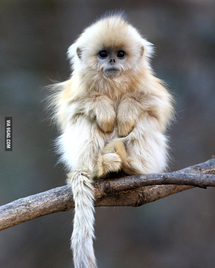 Cutest Monkey Breed