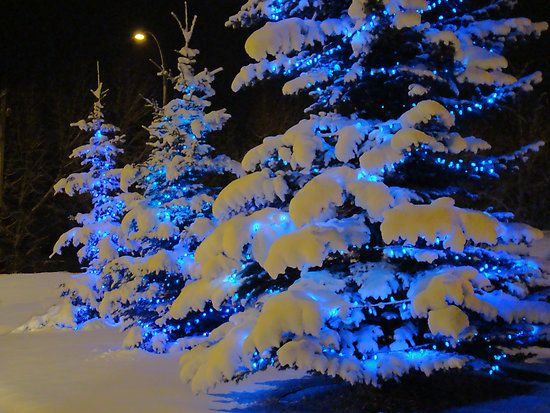 Blue lit trees in snow  I did this last year for my Christmas tree indoors with fake snow(cotton) , blue lights and clear plastic snow flakes you can buy at Big Lots and it was BEAUTIFUL!