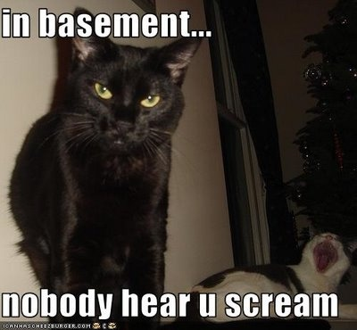 "Apparently there's a bunch of memes of ""evil"" black cats called Basement Cat. Ironic?"