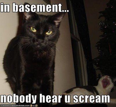 basement cat gonna make you holler!