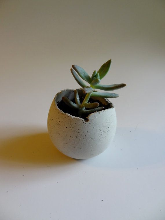 Small White Concrete Planter. Unsealed. Succulent Planter. Indoor. Desk Accessory. Jewelry Storage. Urban Industrial. Round. Egg. Cement. on Etsy, $12.00