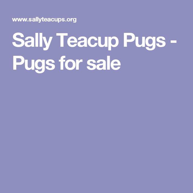 Sally Teacup Pugs - Pugs for sale