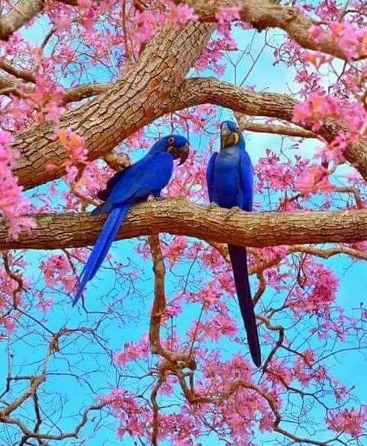 Beautiful Birds GOD s CREATION