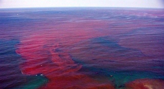 Мексиканский залив, Флорида, США  Красные приливы – это уникальное явление, вызванное бурным размножением организмов (протисты).
