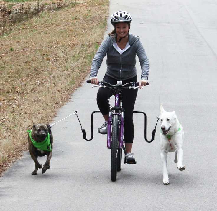 28 Best Biking With Dogs Images On Pinterest Biking Your Dog