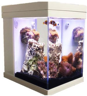 JBJ 3G Cubey is the premier 3 gallon desktop All-In-One biotope. Whether you're a family looking for an entry level freshwater aquarium or a moderate to advanced marine aquarist looking for the challe
