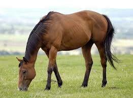 Het paard staat symbool voor:kracht, vitaliteit en intelligent.