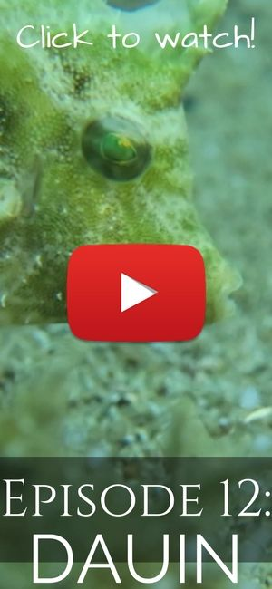 Episode 11: The macro paradise of Dauin, Philippines. Some of the best diving in the world! Click to watch!