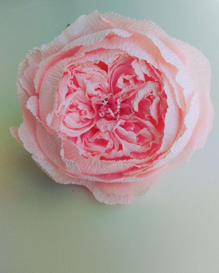 David Austen Paper Rose