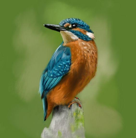 Jégmadár / Kingfisher - digital drawing