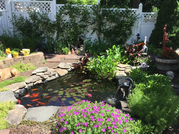 186 best tetrapond images on pinterest for 50 gallon koi pond