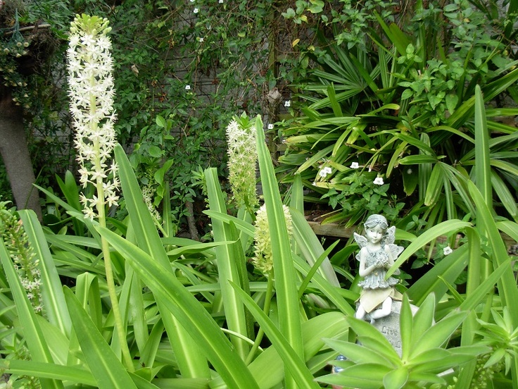 A fairy sitting between Eucomis lilies