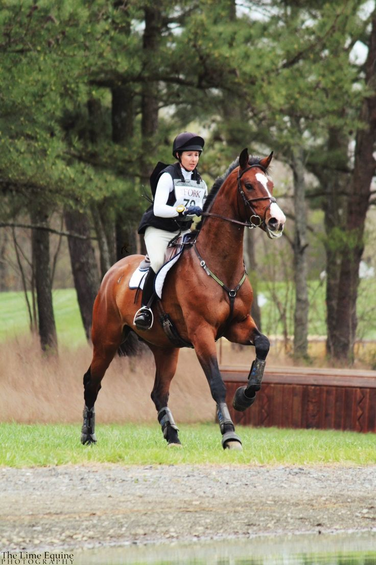 cross country horse