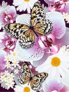 Красивые бабочки - анимация на телефон №1424770