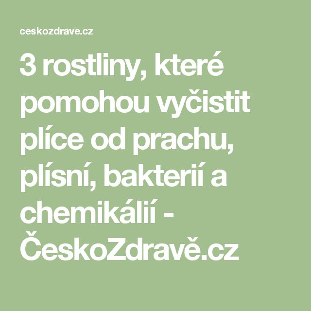 3 rostliny, které pomohou vyčistit plíce od prachu, plísní, bakterií a chemikálií - ČeskoZdravě.cz