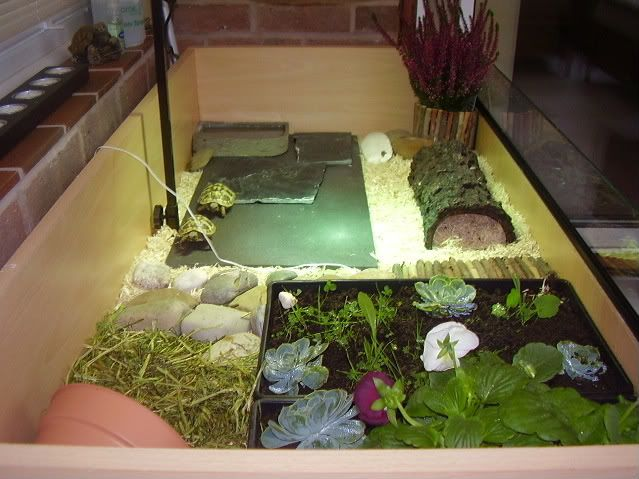115 Best Images About Kr 246 Ten On Pinterest Tortoise House Guinea Pigs And Turtles