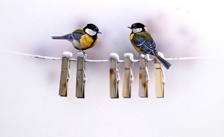 Sanatçı Jan Weenink. Dünya kuşlar .. LiveInternet tartışması - Rus Service Çevrimiçi günlüğü