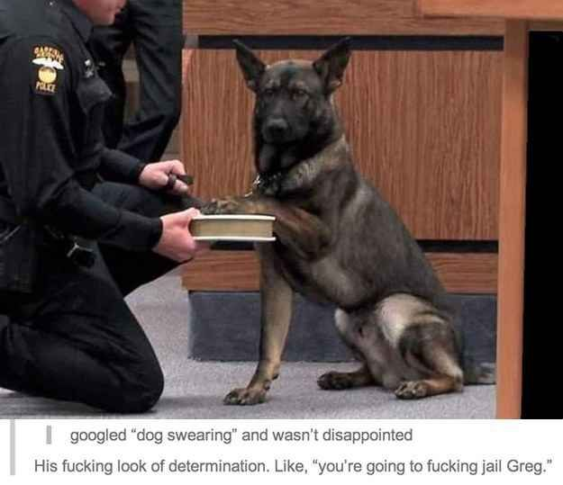 When they found this law-enforcing dog.