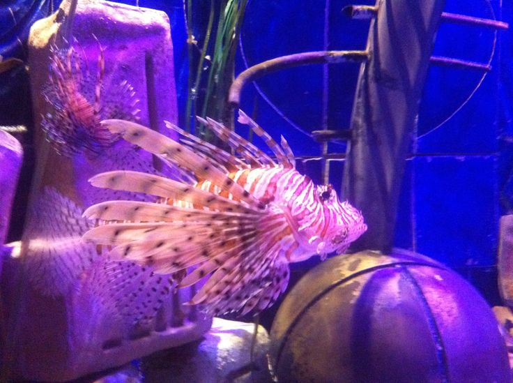 Atlantis The Palm -hotel, Dubai 2013 - Very dangerous fish.
