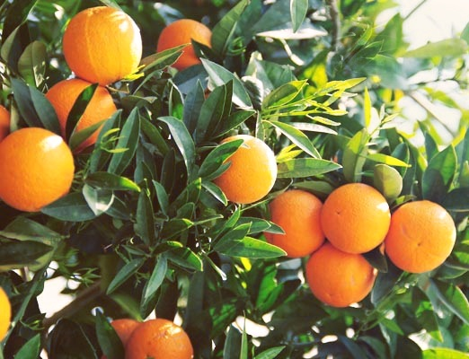Oranges! Most important information you should know about the benefits of eating oranges and other interesting facts, read here http://www.benefitsofeating.com/oranges/