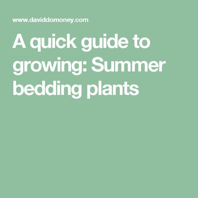 A quick guide to growing: Summer bedding plants