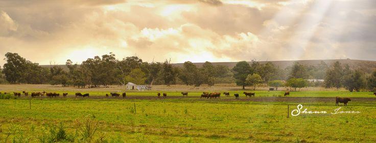 Farmland Perth - Shaun Jones