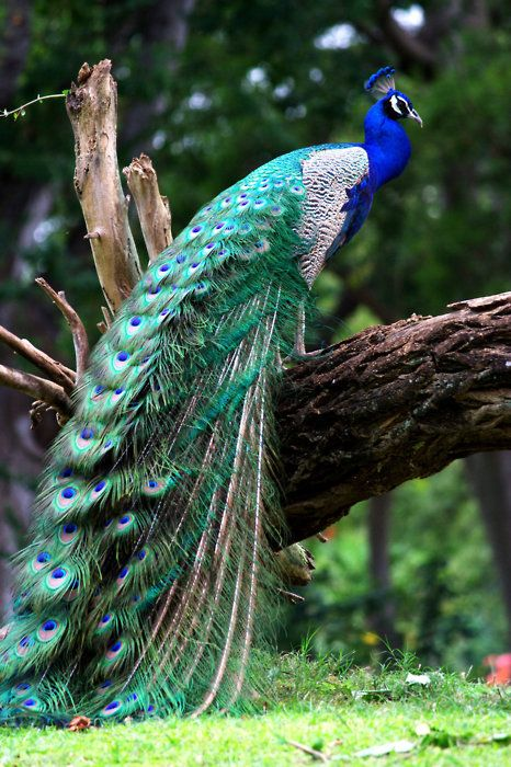 Strikingly Attractive Bird Photography