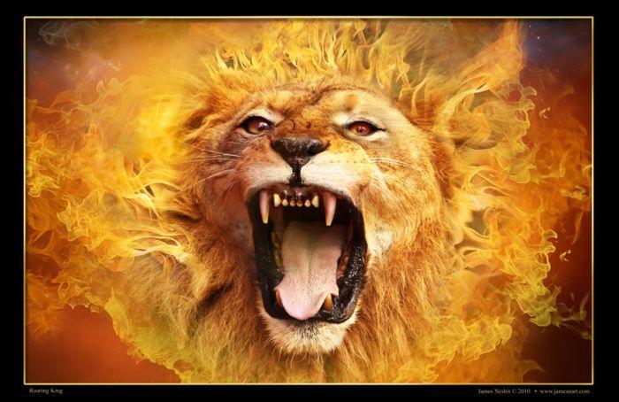 Lion Collection  | Prophetic art, Art, Lion of judah