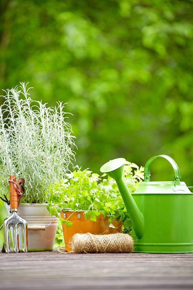 """""""7 Best Plants for Your Home"""""""