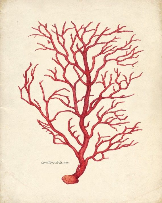 Vintage Sea Coral Print - Branch Coral