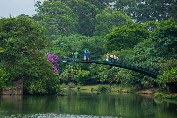 Ponte do Ibirapuera