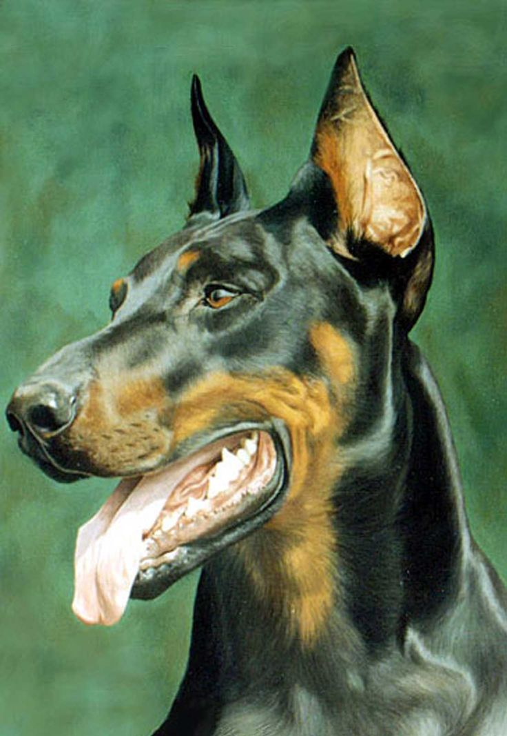 Doberman dog portrait oil painting on canvas