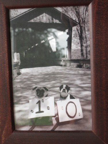 Wedding table numbers with dogs!! I wonder if Mattie and Rylie would agree to do this! Lol
