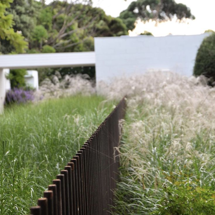 Steel Rod Pool Fence by Eckersley Garden Architecture
