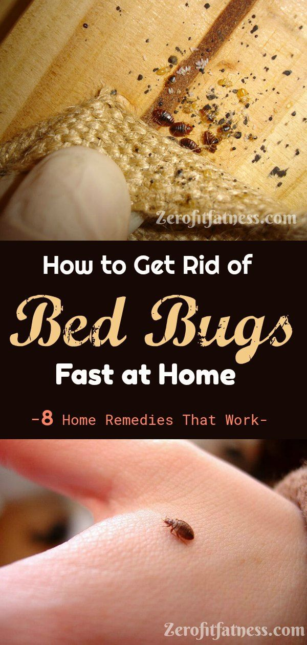 How To Get Rid Of Bed Bugs Fast 8 Home Remedies That Work Rid