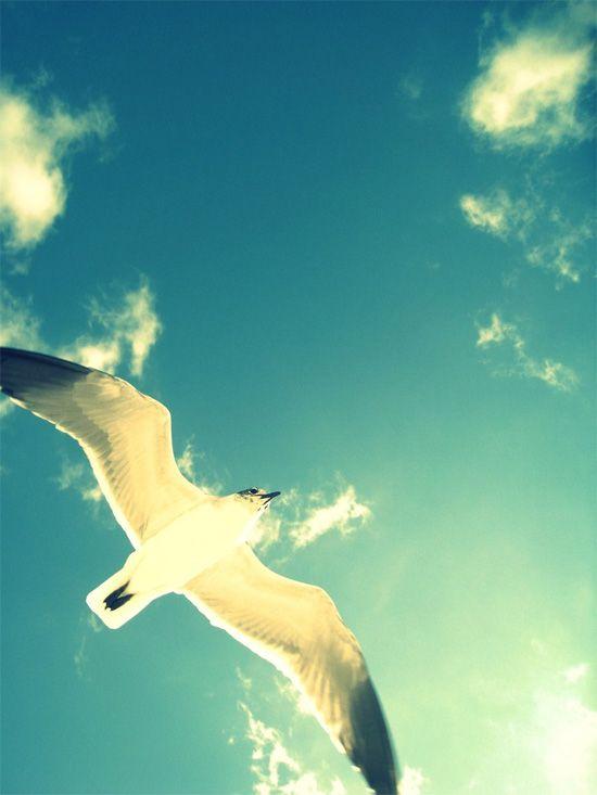 bird on a blue sky