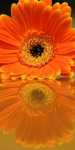 "500px / Photo ""Flower Reflection"" by John Velocci"