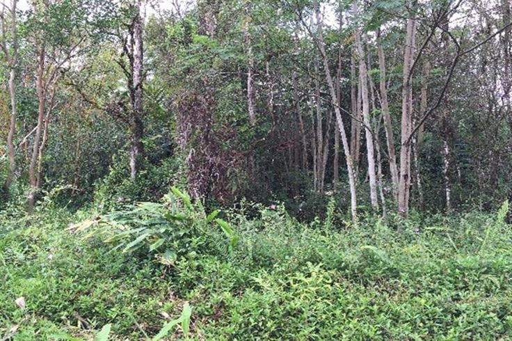 Alii Rd Lot 1141 , Nanawale Estates Subdivision  Hawaii Information Service Property Search