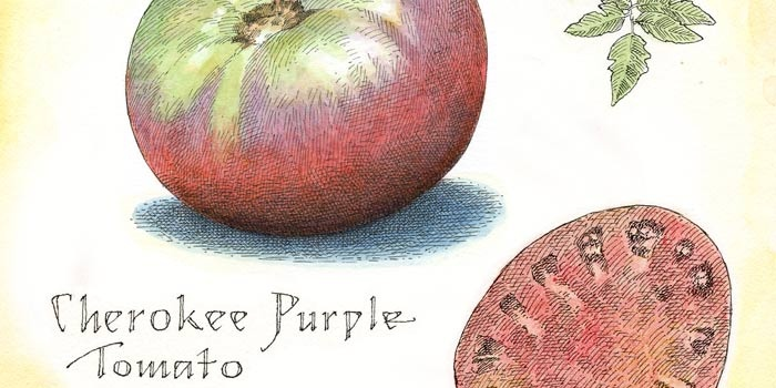 I am growing these and just can't wait for them to ripen!  Cherokee Purple Tomato | Garden and Gun