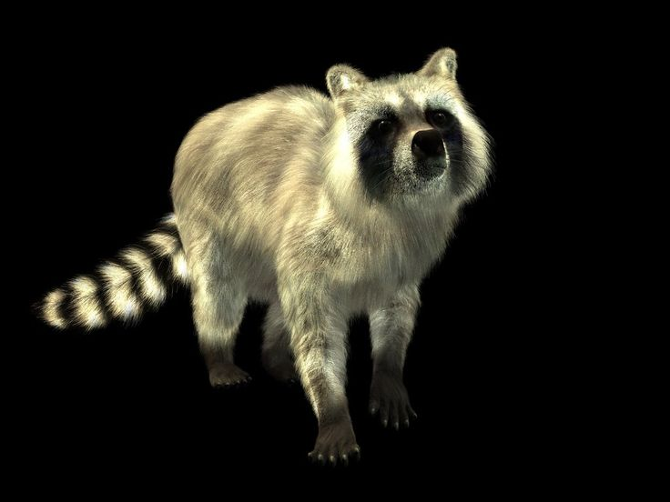 Racoon by Lord-Crios.deviantart.com on @DeviantArt