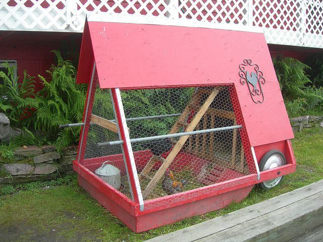 1000 ideas about portable chicken coop on pinterest for Small portable chicken coop