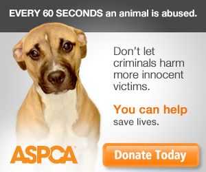 Fighting animal cruelty and providing second chances for abused animals nationwide.