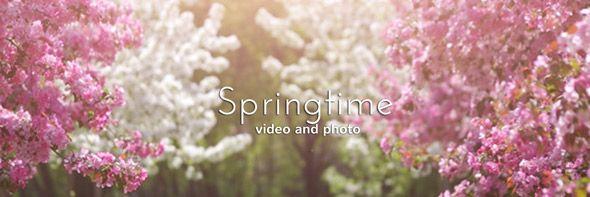 Springtime video collection. #springtime #spring #springgarden #videohive #blossom